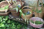 sl_plantes sauv comest - 20